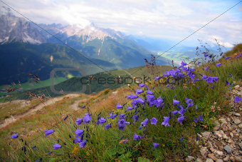 Violet in Val Pusteria, Dolomite - Italy