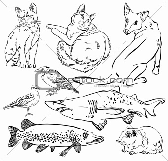 Sketch of animal set