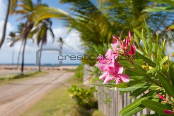Caribbean Beach Path
