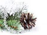 Christmas background with pine cone