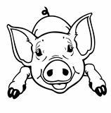 piglet black white