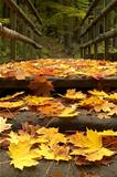 leaves on the bridge