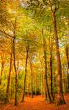 Vibrant Autumn Fall forest landscape image