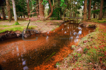 Bridge over stream in vibrant Winter Autumn Fall forest landscap