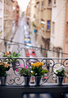 potted plants on an sill