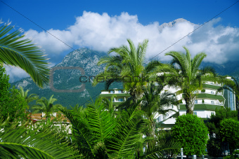 tropical palms in tourist resort in mountains