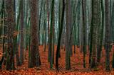 Mixed autumn forest.