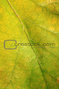 Green autumn leaf texture