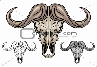 Buffalo skull isolated on white
