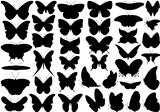 Butterfly set