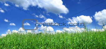 blissful grassland