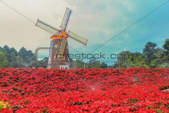 Red Poinsettia and Wind turbine
