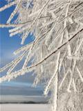 Frozen tree branches on winter