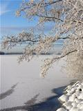 Snowy tree near frozen lake
