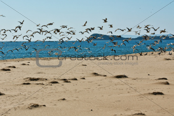 seascape with flying gulls