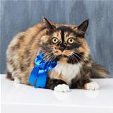 Prizewinning feline