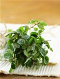 green fresh oregano - herb spice