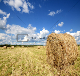 Amazing golden hay bales