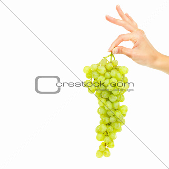 A delicious bunch of grapes