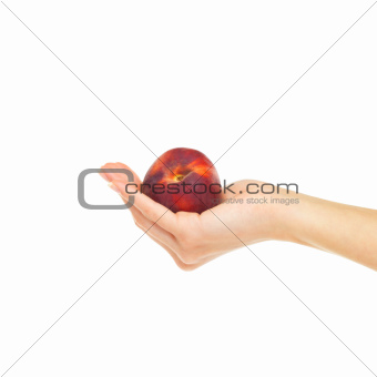A juicy nectarine