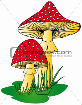 Toadstool in grass
