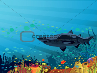 Coral reef with colored fish and shark