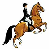 horse rider dressage