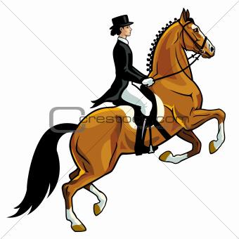 horse rider dressage