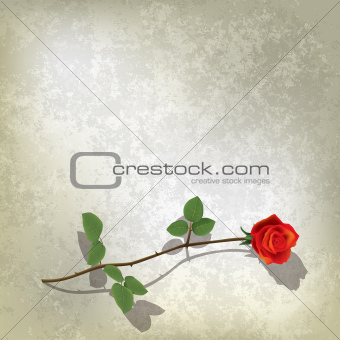 abstract grunge black background with rose