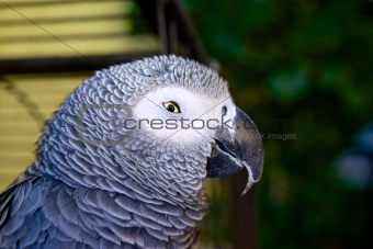 Sly Parrot