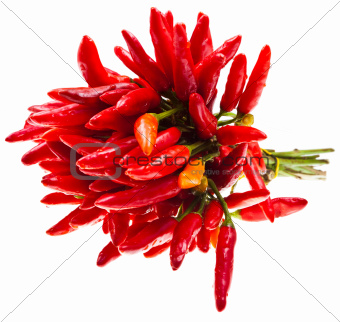 bunch of fresh small red peperoncini isolated on white