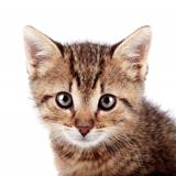 Portrait of a striped kitten