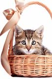 Striped kitten in a basket