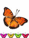ฺButterfly