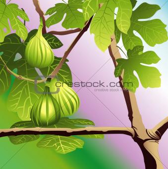 Three Green Figs