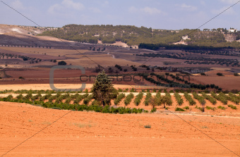 typical Spanish rural landscape