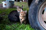 cute kittens outdoors