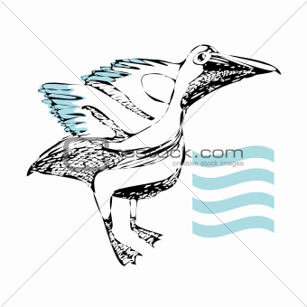pelican drawing