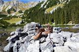leather hiking shoes in Alps