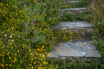 Stairs surrounded by flowers