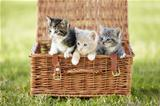 They&#39;ve got their own basket