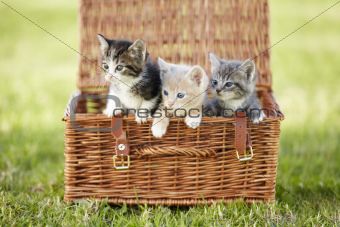 They've got their own basket