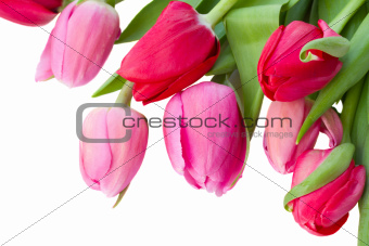 close up of spring tulips