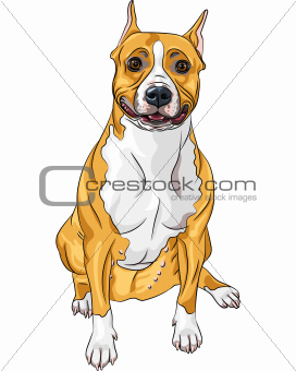 vector sketch smiling dog American Staffordshire Terrier breed s