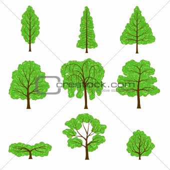Set of different crown of a trees isolated on white