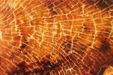 Digital paint grunge wood background