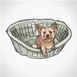 Yorkshire Terrier in Basket