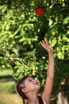 Girl reaching up for an apple