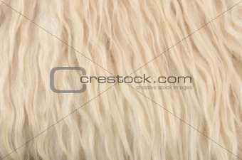 close up sheepskin texture background
