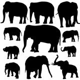 Elephant silhouettes on white background